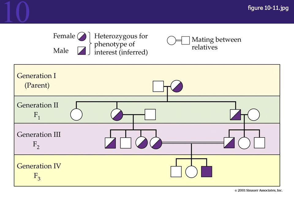 figure 10-11.jpg Figure 10.11 Figure 10.11