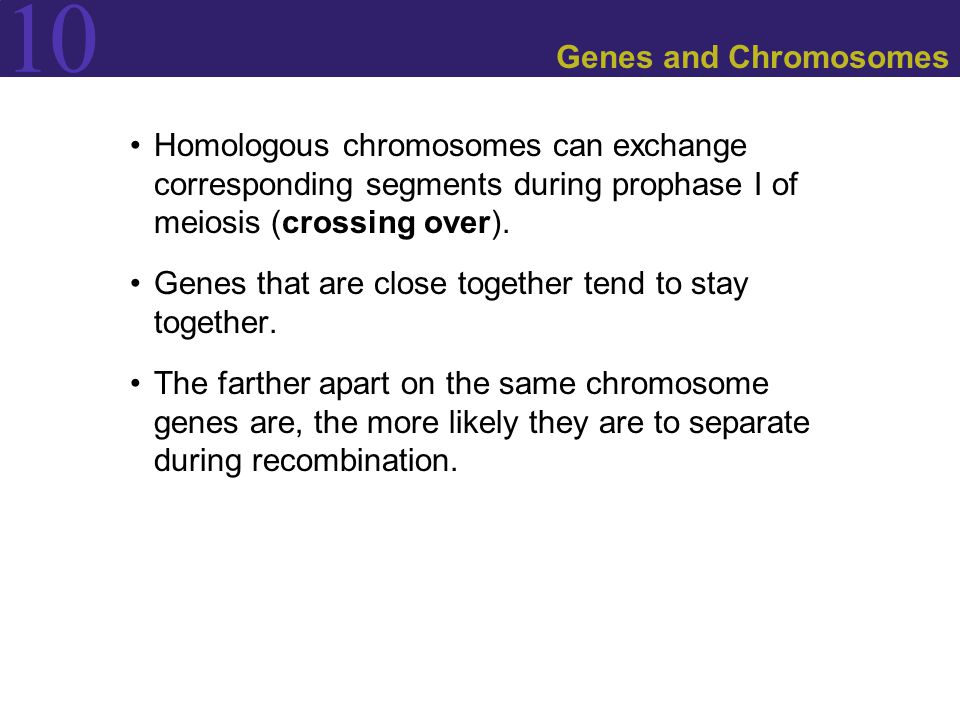 Genes and Chromosomes Homologous chromosomes can exchange corresponding segments during prophase I of meiosis (crossing over).