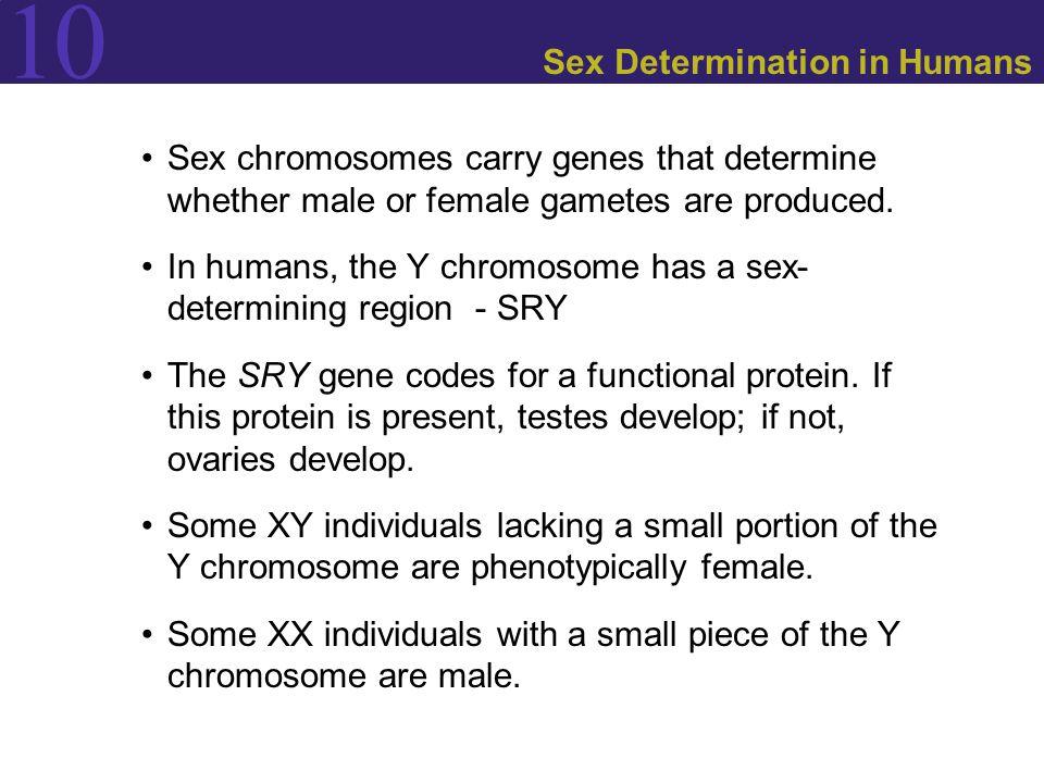 Sex Determination in Humans