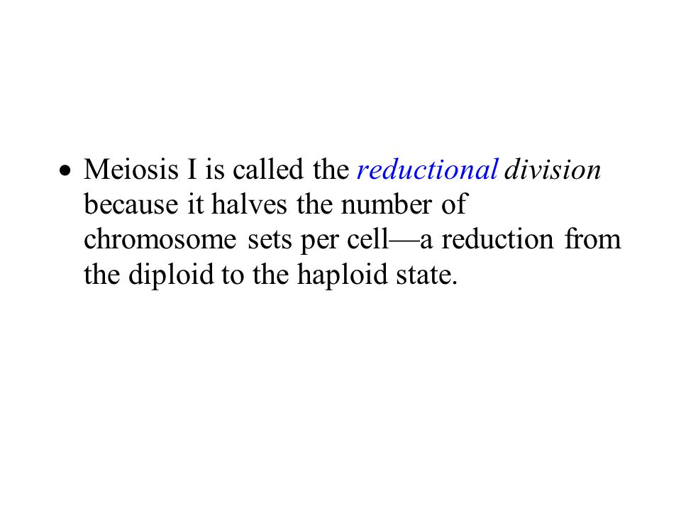  Meiosis I is called the reductional division because it halves the number of chromosome sets per cell—a reduction from the diploid to the haploid state.