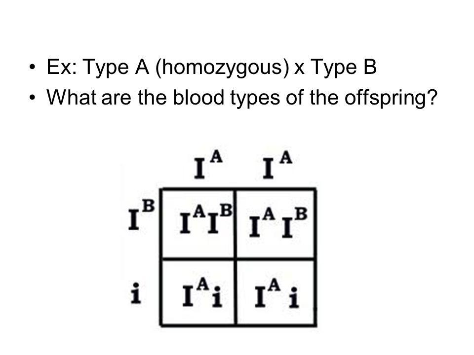 Ex: Type A (homozygous) x Type B