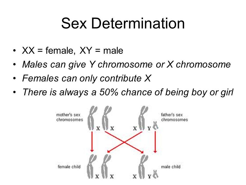 Sex Determination XX = female, XY = male