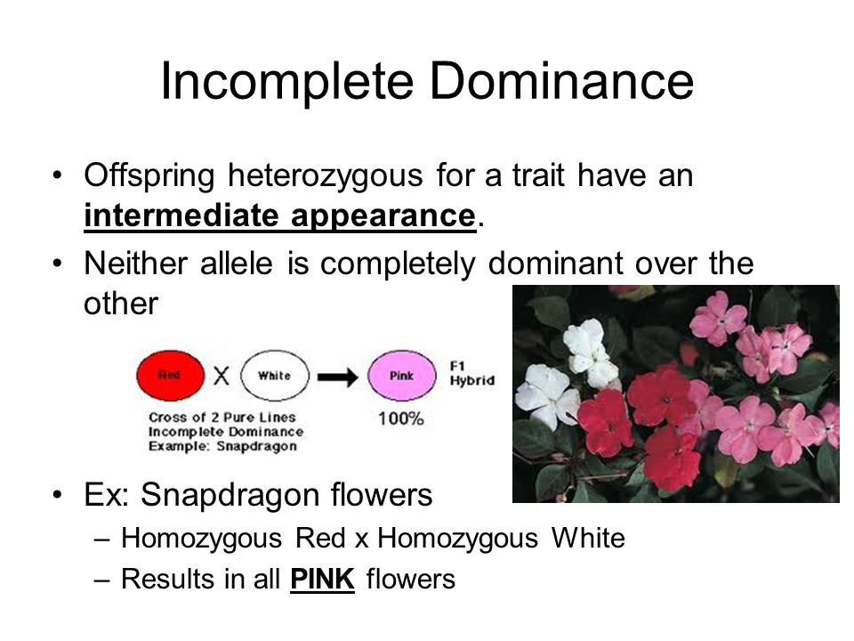 Incomplete Dominance Offspring heterozygous for a trait have an intermediate appearance. Neither allele is completely dominant over the other.