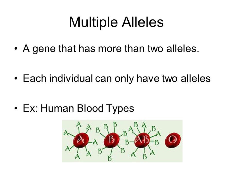 Multiple Alleles A gene that has more than two alleles.