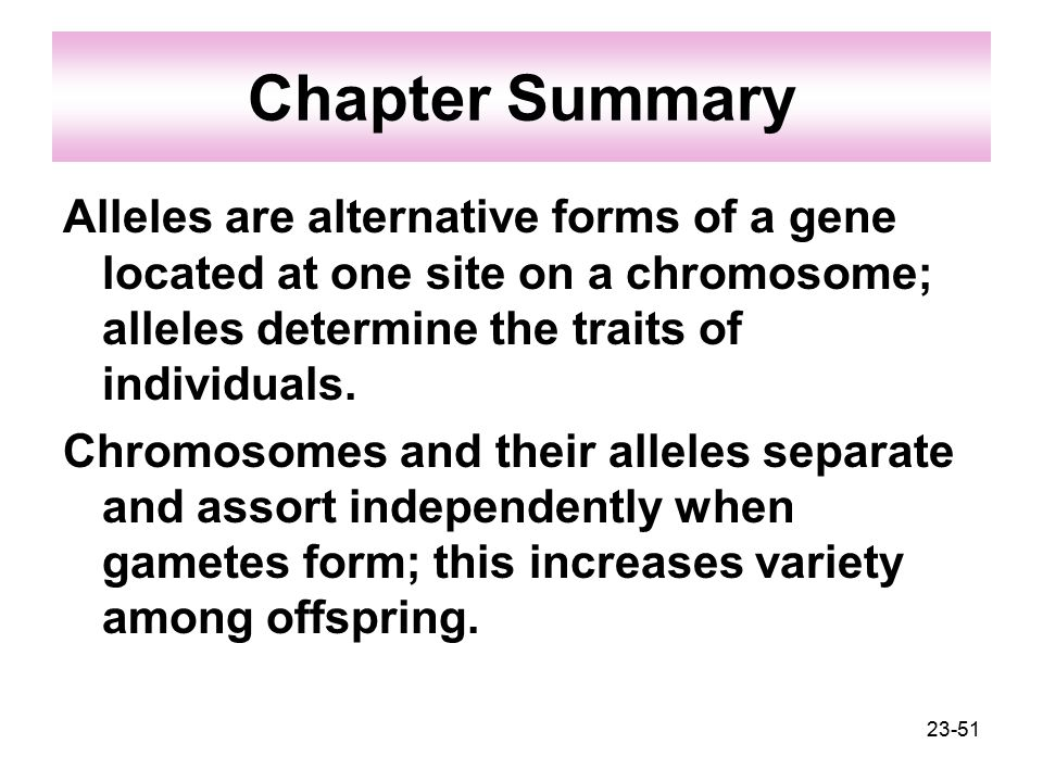 Chapter Summary Alleles are alternative forms of a gene located at one site on a chromosome; alleles determine the traits of individuals.