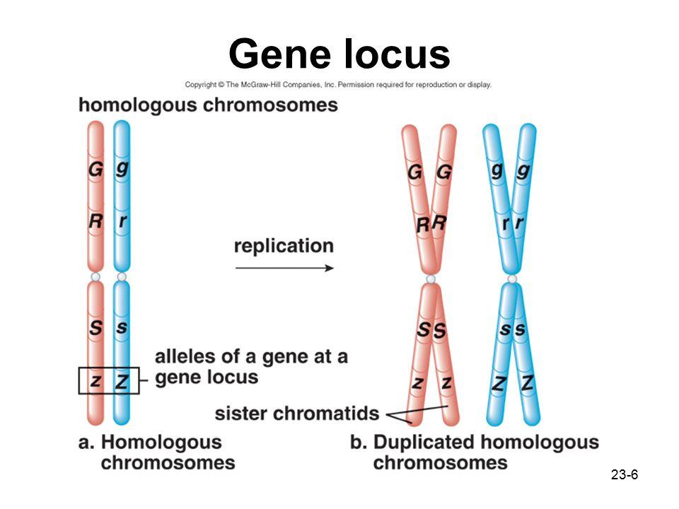 Gene locus