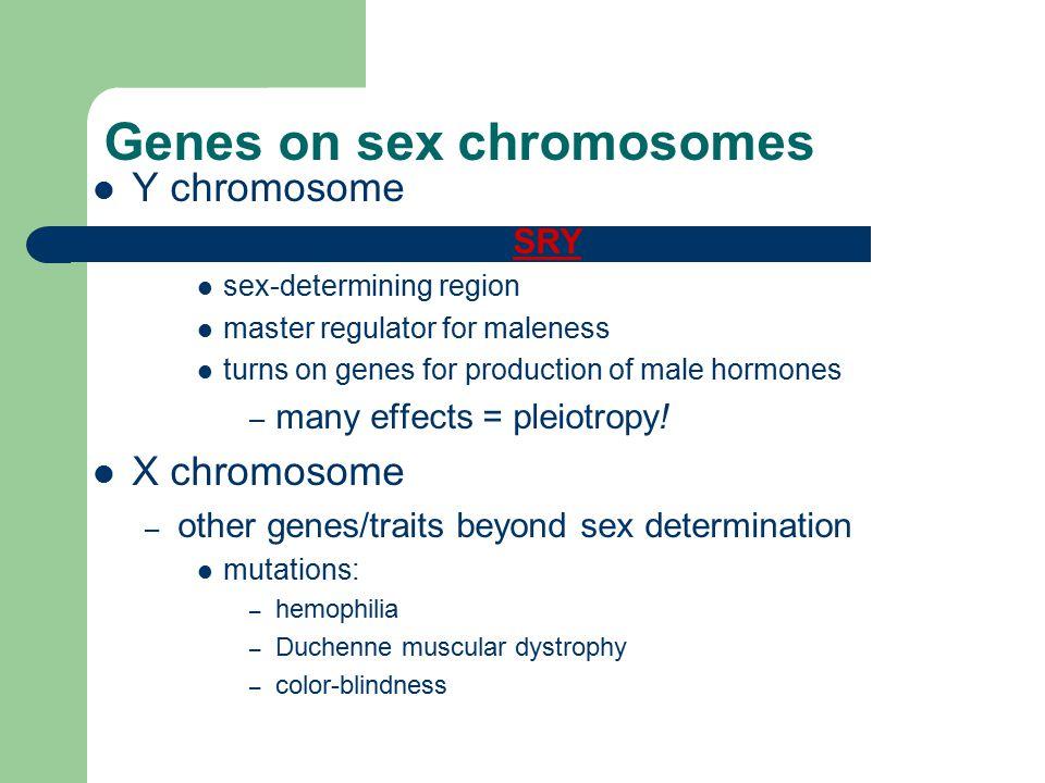 Genes on sex chromosomes