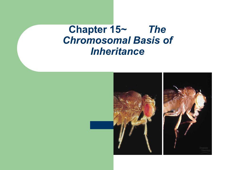 Chapter 15~ The Chromosomal Basis of Inheritance