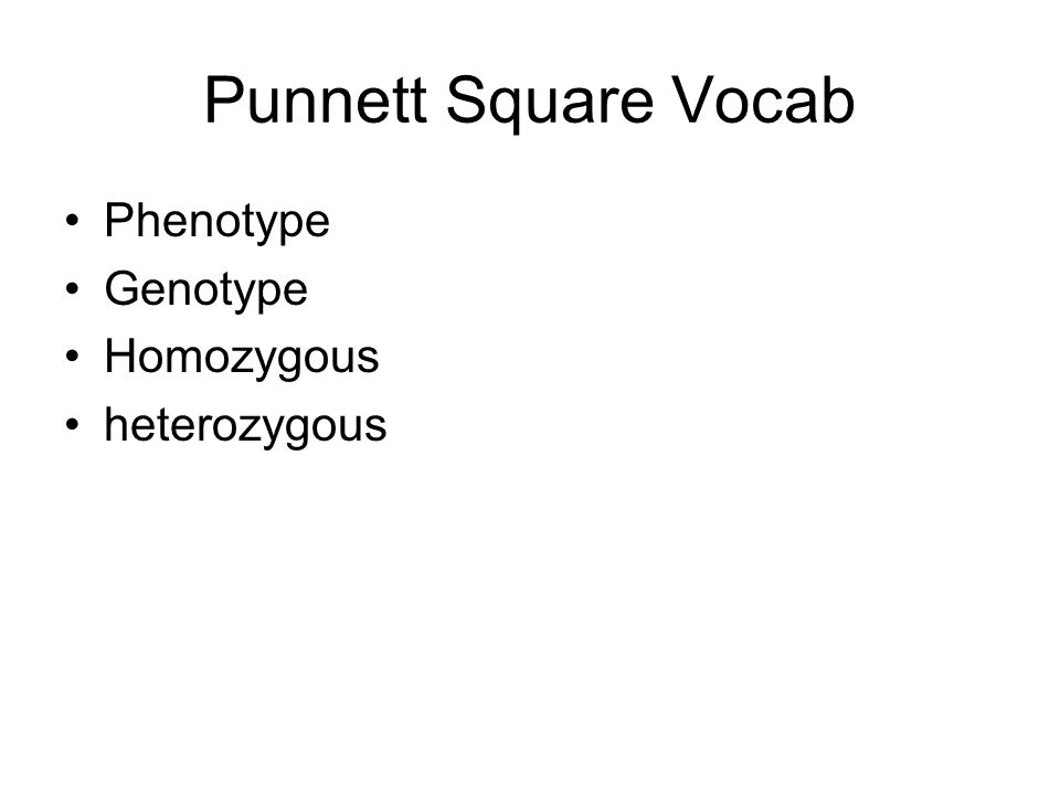 Punnett Square Vocab Phenotype Genotype Homozygous heterozygous