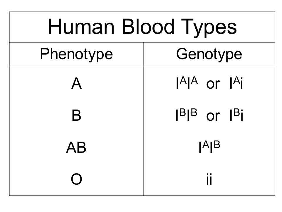 Human Blood Types Phenotype Genotype A B AB O IAIA or IAi IBIB or IBi