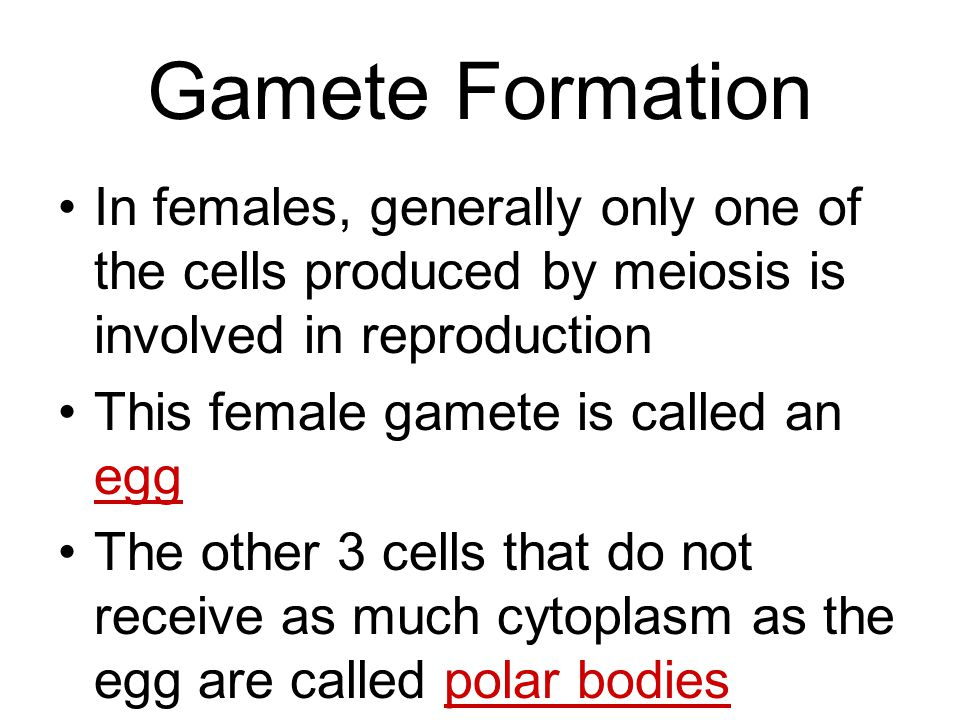 Gamete Formation In females, generally only one of the cells produced by meiosis is involved in reproduction.
