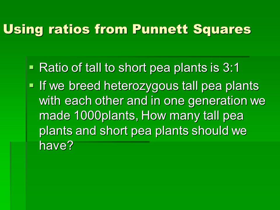 Using ratios from Punnett Squares