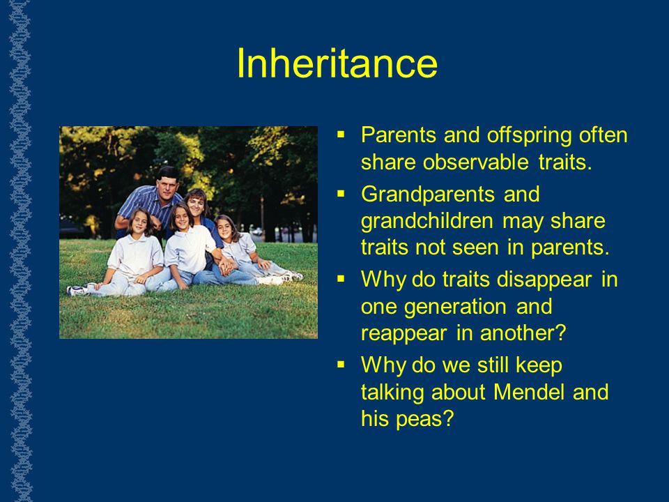 Inheritance Parents and offspring often share observable traits.