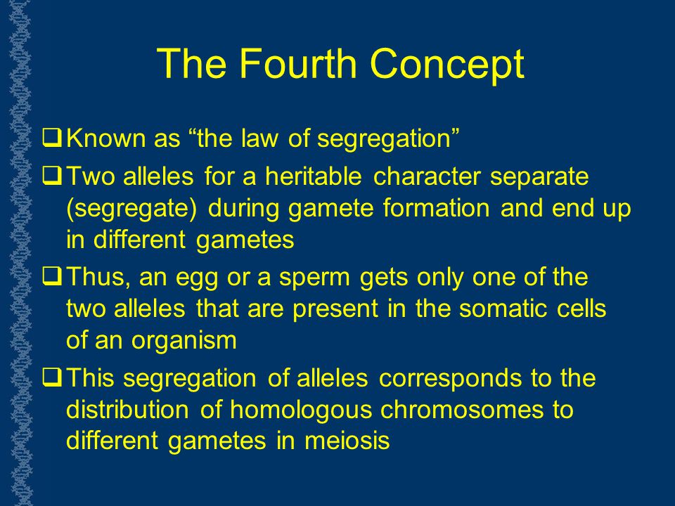 The Fourth Concept Known as the law of segregation
