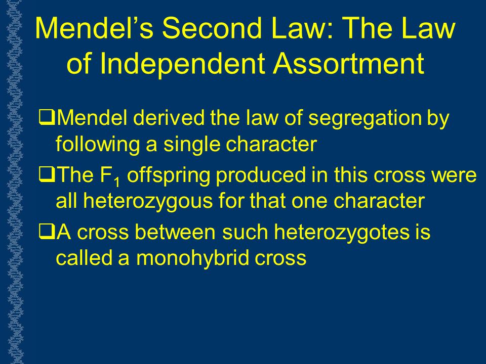 Mendel's Second Law: The Law of Independent Assortment