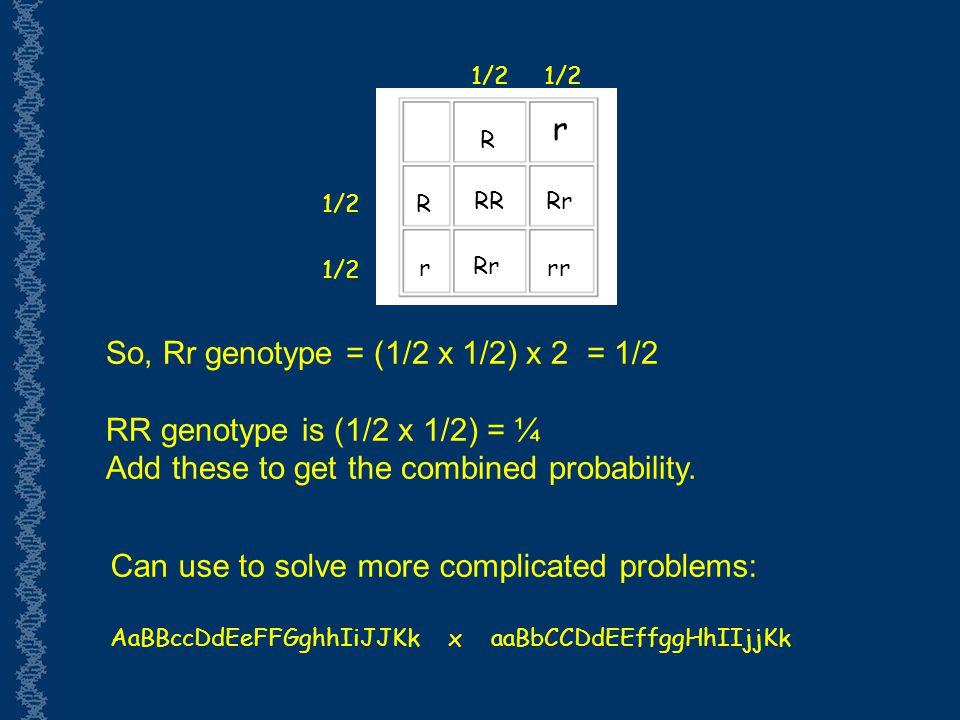 So, Rr genotype = (1/2 x 1/2) x 2 = 1/2 RR genotype is (1/2 x 1/2) = ¼