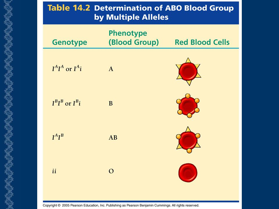 Codominance is based on the carbohydrates being expressed differently on the red blood cells