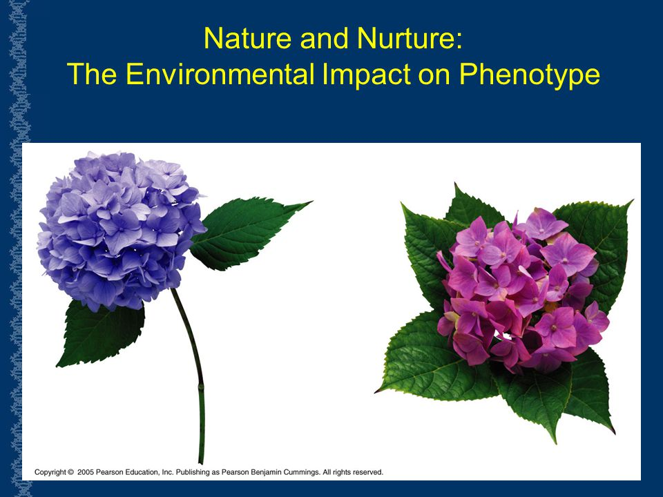 The Environmental Impact on Phenotype