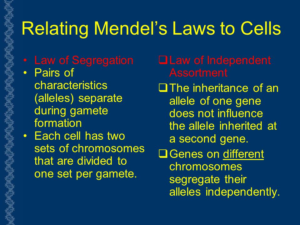 Relating Mendel's Laws to Cells
