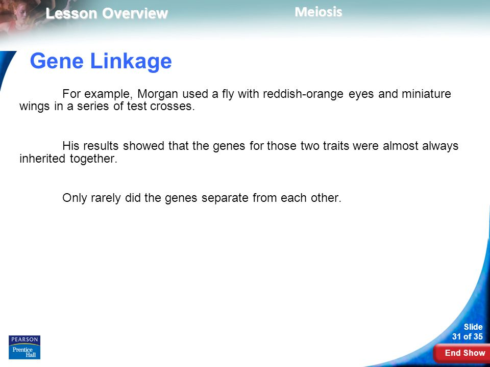 Gene Linkage For example, Morgan used a fly with reddish-orange eyes and miniature wings in a series of test crosses.