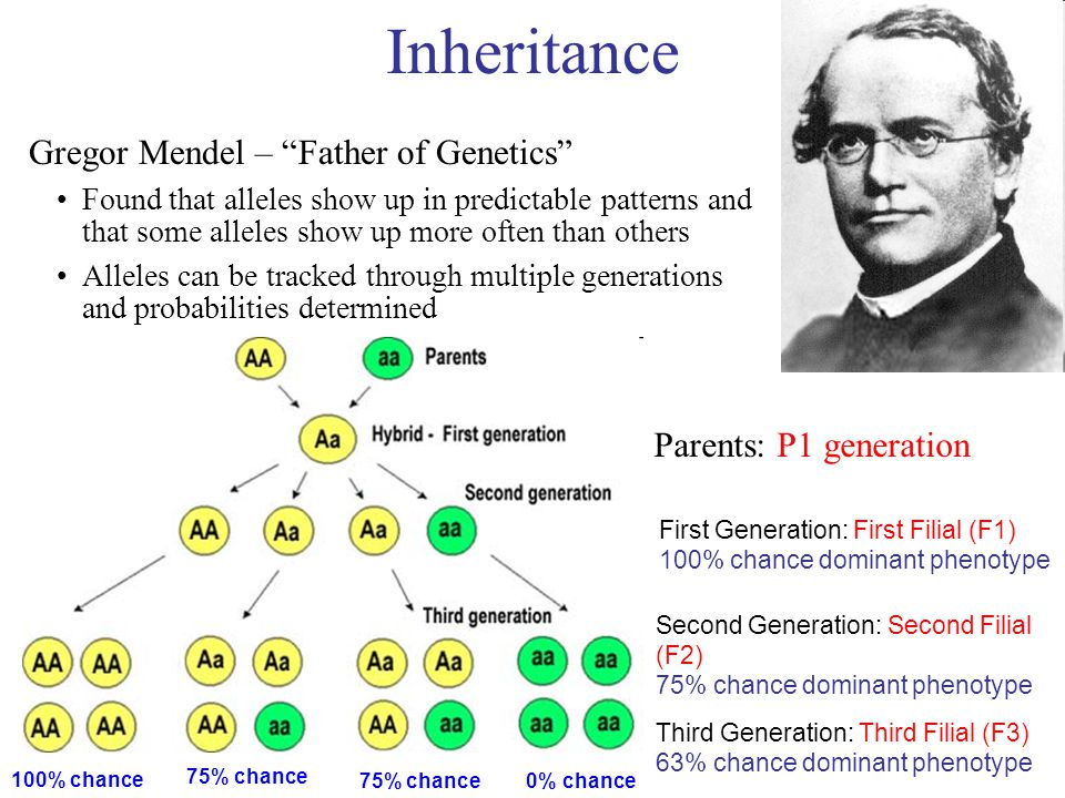 Inheritance Gregor Mendel – Father of Genetics