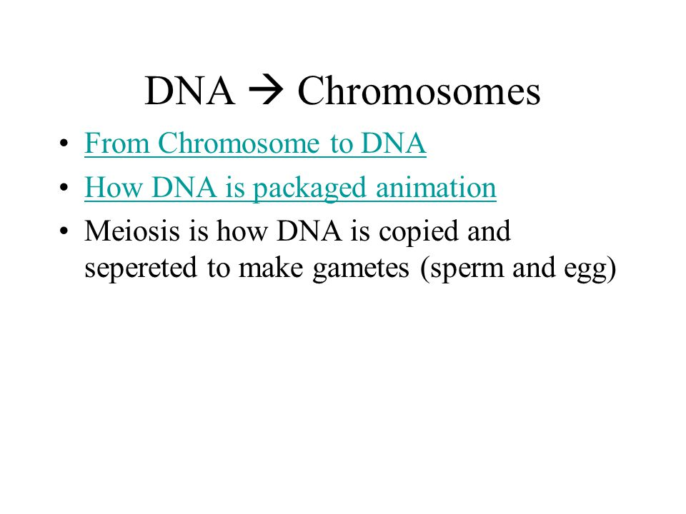 DNA  Chromosomes From Chromosome to DNA How DNA is packaged animation