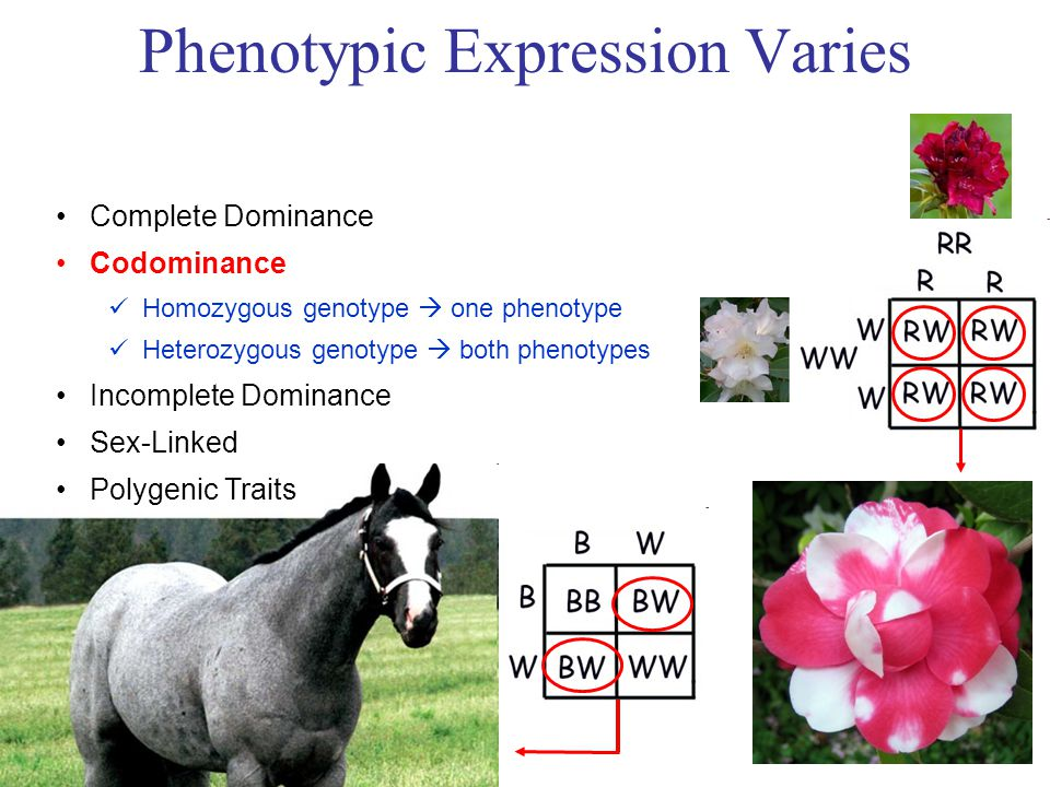 Phenotypic Expression Varies