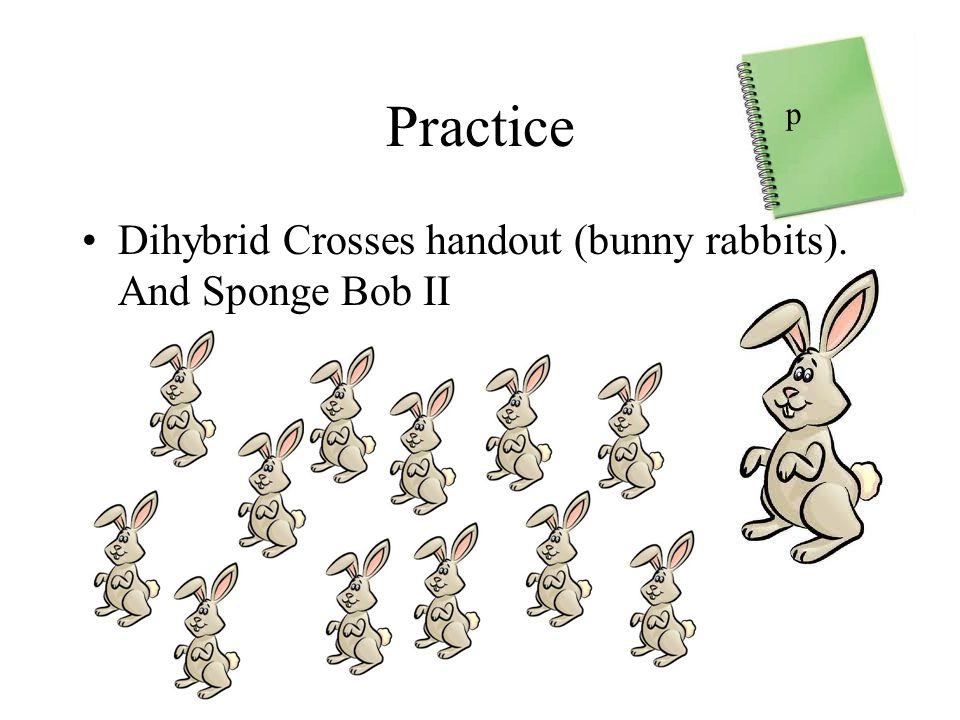 Practice p Dihybrid Crosses handout (bunny rabbits). And Sponge Bob II