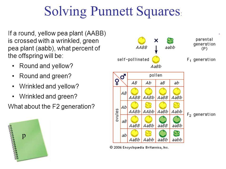 Solving Punnett Squares: