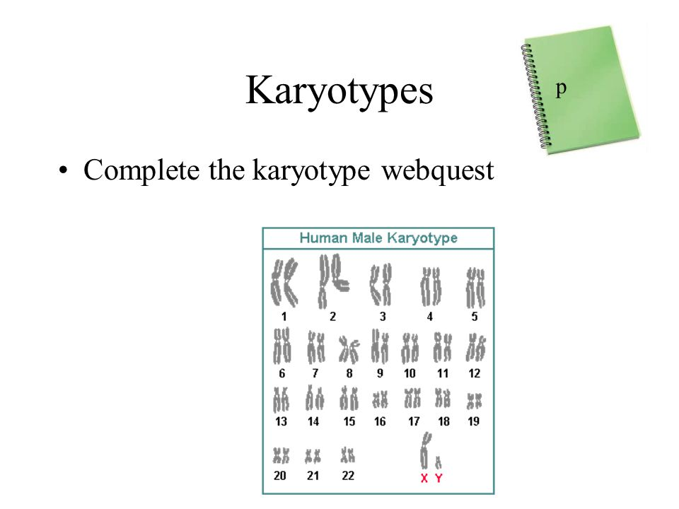 Karyotypes p Complete the karyotype webquest