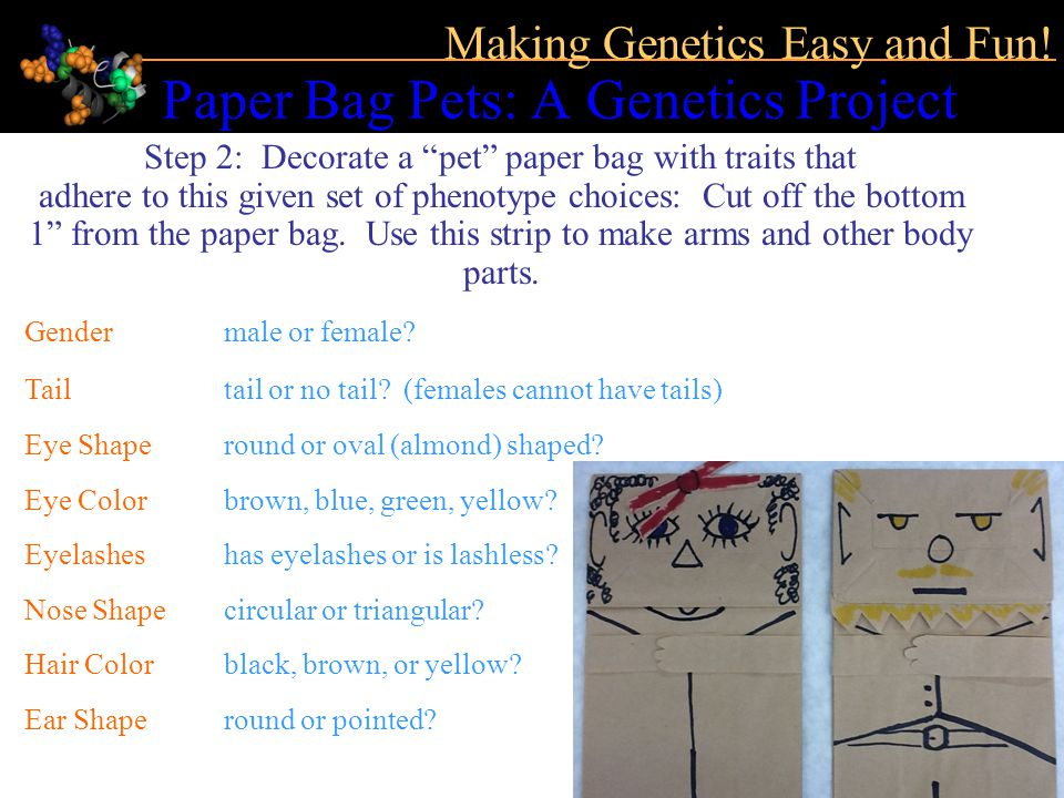 Paper Bag Pets: A Genetics Project