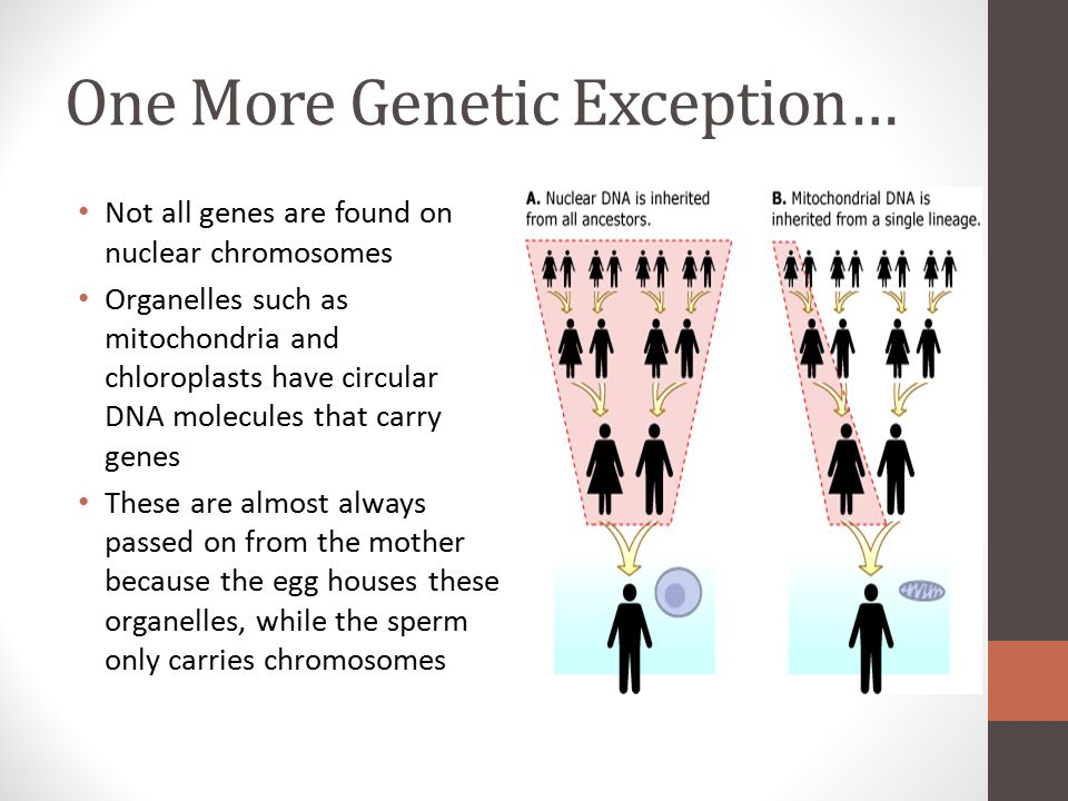One More Genetic Exception…