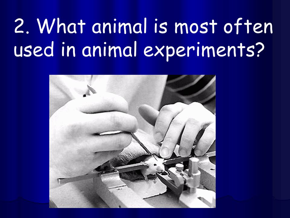 2. What animal is most often used in animal experiments