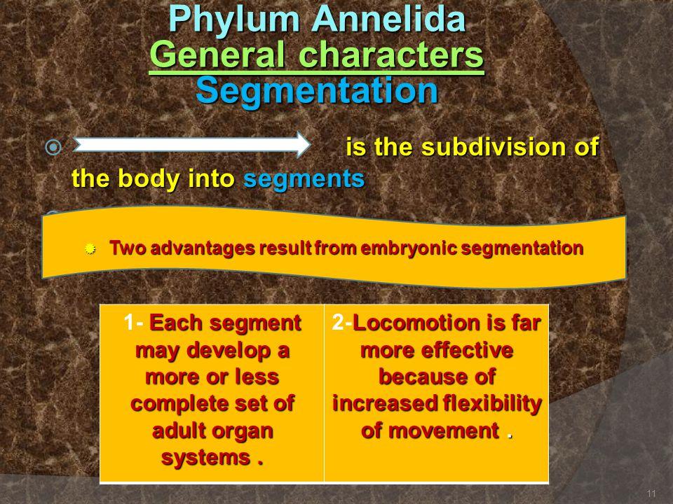 Phylum Annelida General characters Segmentation