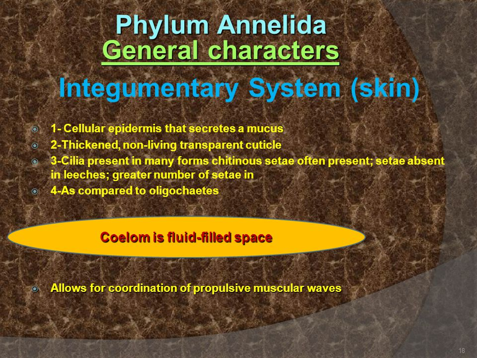 Phylum Annelida General characters Integumentary System (skin)