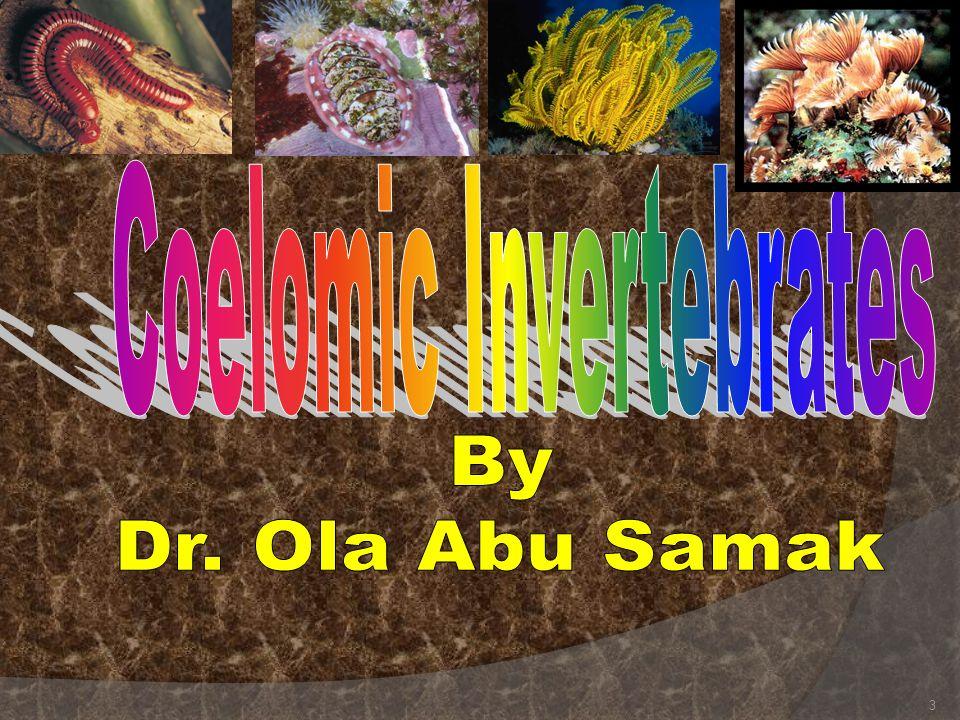 Coelomic Invertebrates