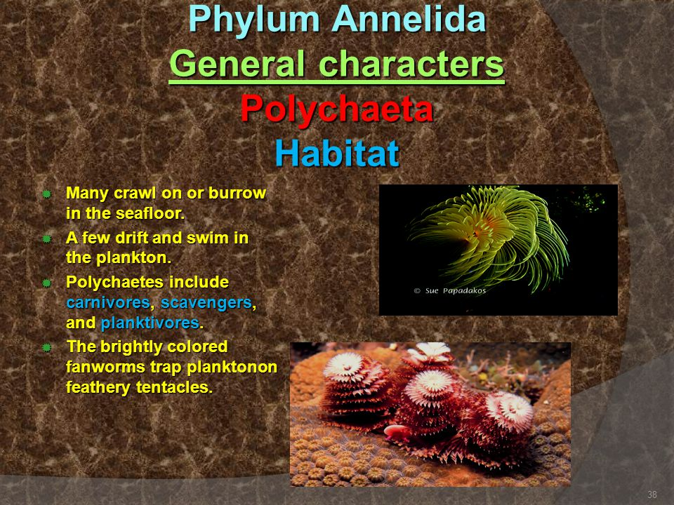 Phylum Annelida General characters Polychaeta Habitat