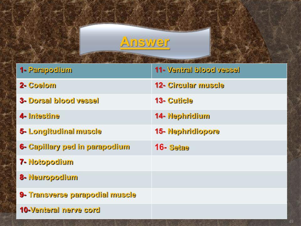 Answer 16- Setae 1- Parapodium 11- Ventral blood vessel 2- Coelom