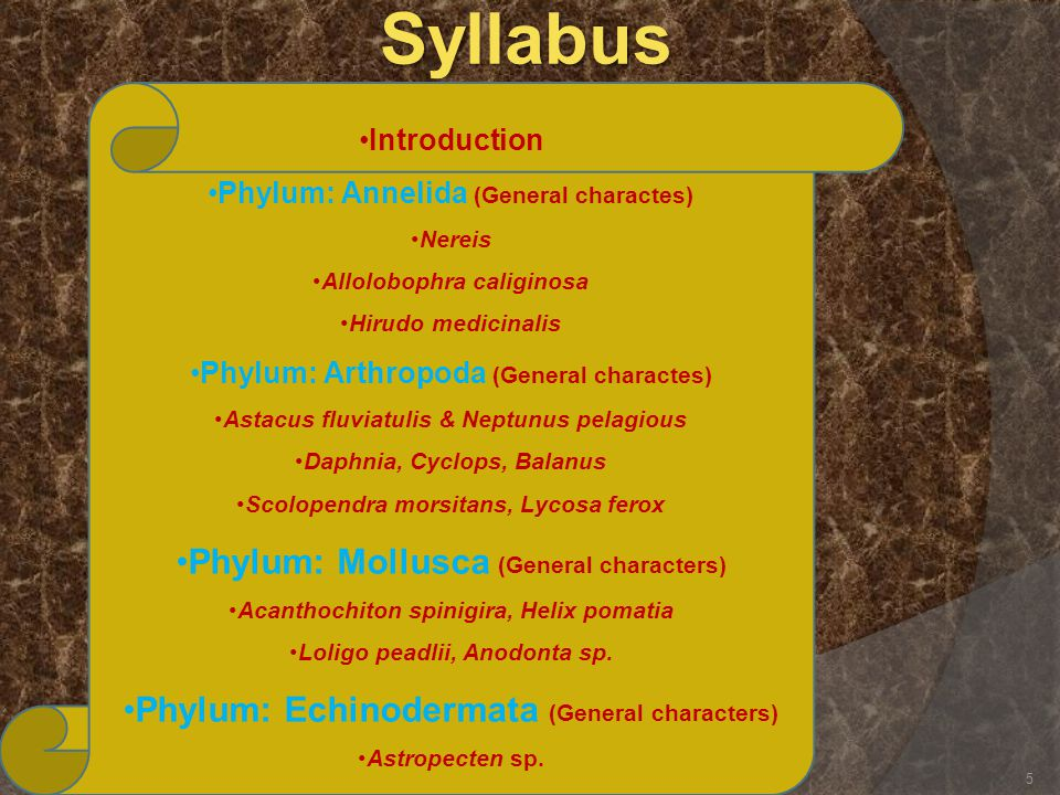 Syllabus Phylum: Mollusca (General characters)