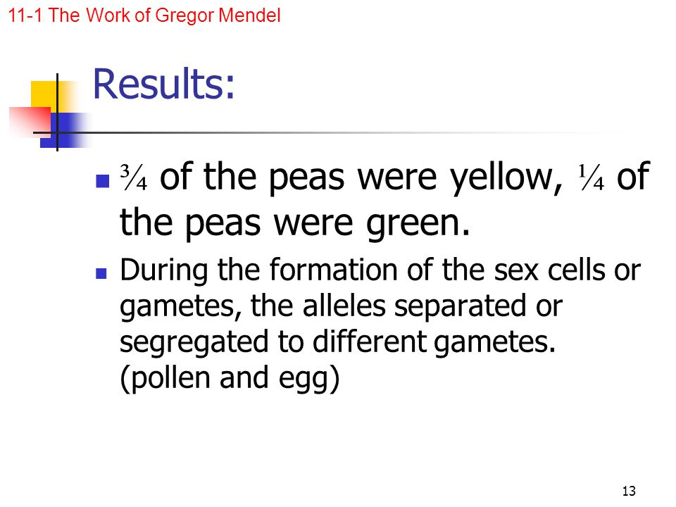 Results: ¾ of the peas were yellow, ¼ of the peas were green.