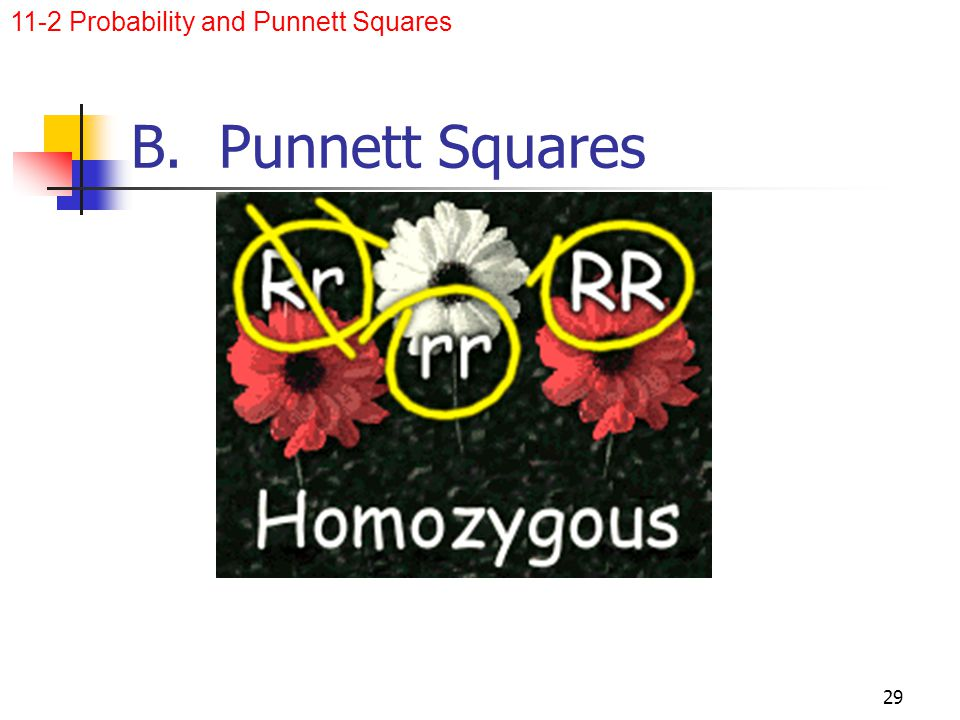 11-2 Probability and Punnett Squares