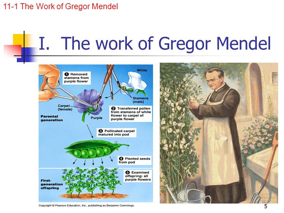 I. The work of Gregor Mendel