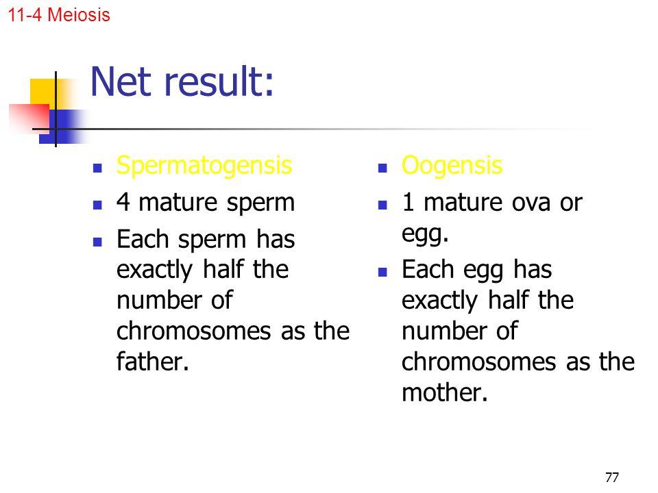 Net result: Spermatogensis 4 mature sperm
