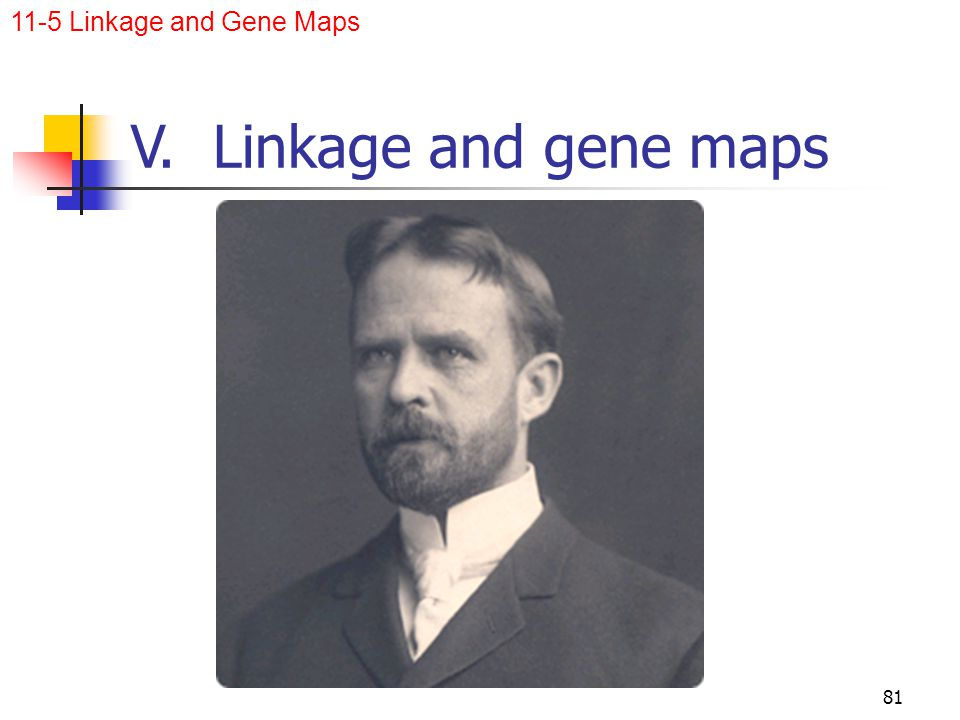 11-5 Linkage and Gene Maps V. Linkage and gene maps