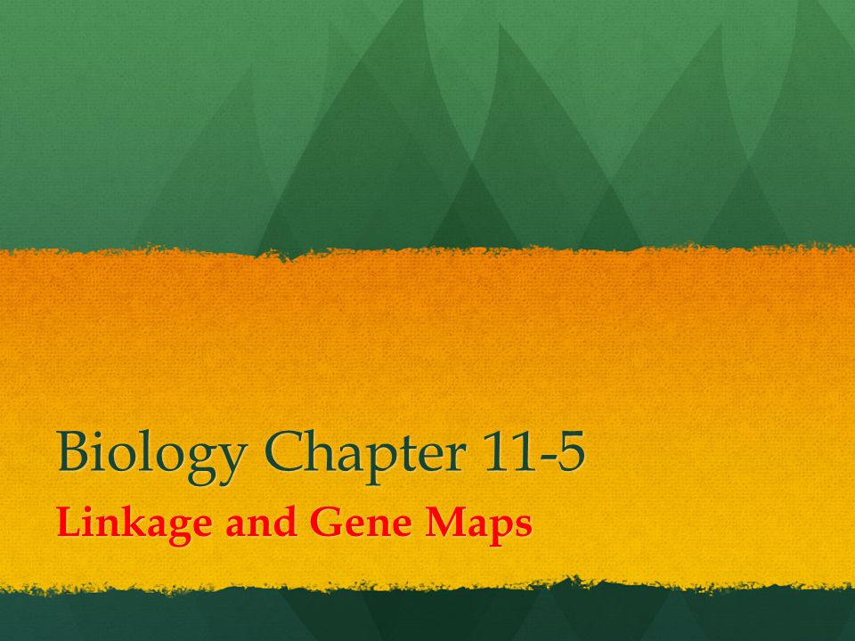 Biology Chapter 11-5 Linkage and Gene Maps