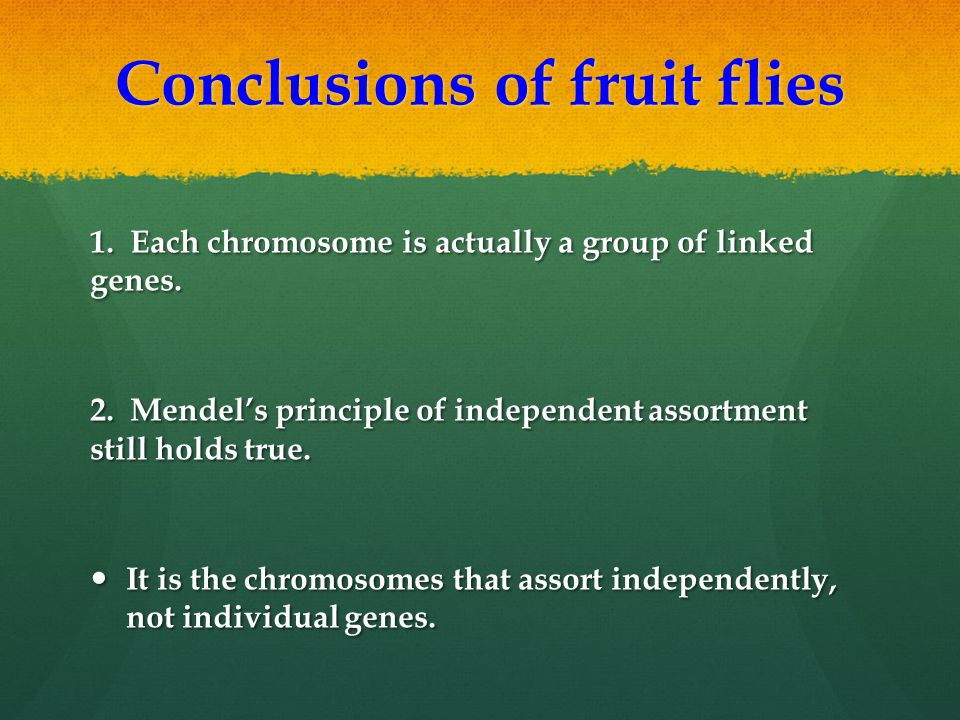 Conclusions of fruit flies