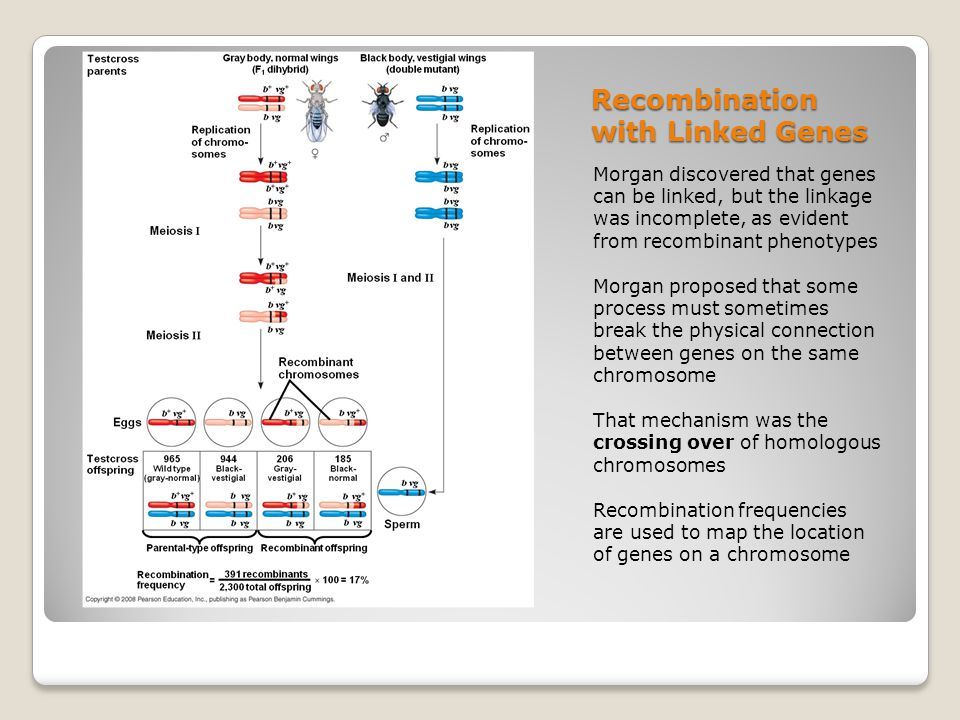 Recombination with Linked Genes