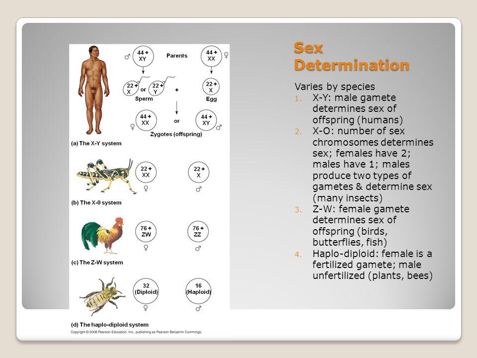 Sex Determination Varies by species