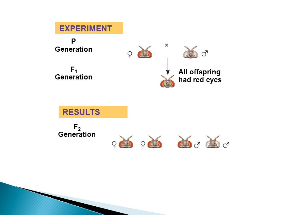EXPERIMENT RESULTS P  Generation F1 All offspring Generation