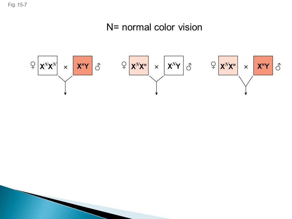 N= normal color vision XNXN  XnY XNXn  XNY XNXn  XnY Fig. 15-7